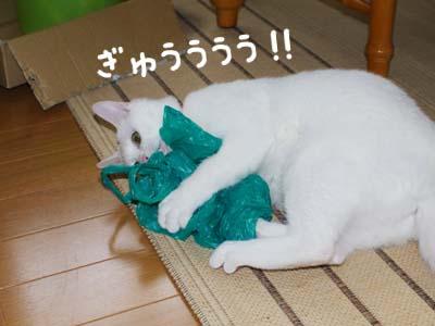 cat307