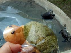 カメロンパンとウミガメ