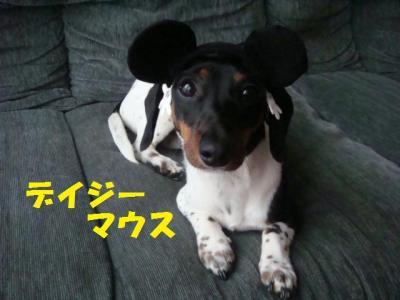 デイジーマウス