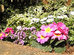 20070305_1.jpg