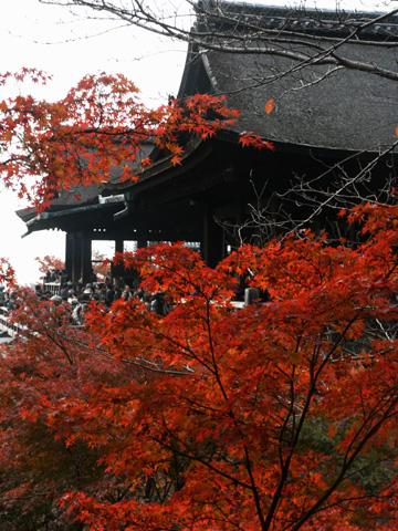 20071126_4.jpg