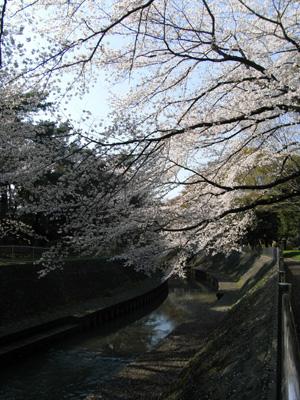 20080331_10.jpg