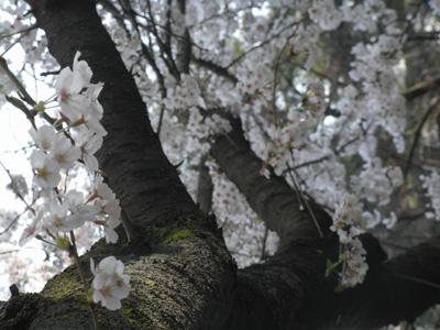 20080331_6.jpg