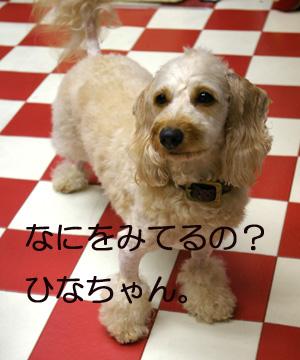 IMGP4730-1.jpg