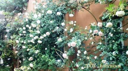 2008壁庭1