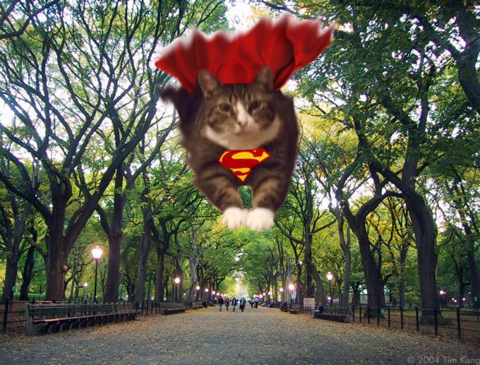 cat b_convert_20080604230113