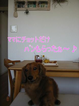 20080524_211422395.jpg
