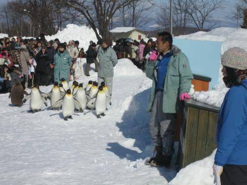 ペンギン3110215