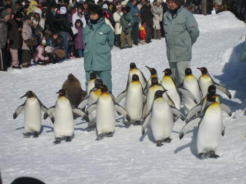ペンギン4110215