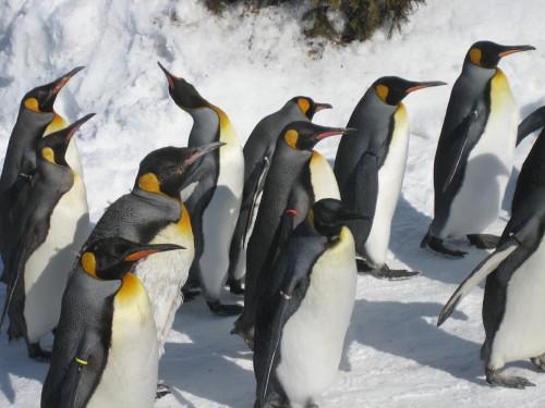 ペンギン5110215