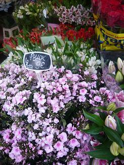 マルシェのお花