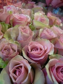 綺麗なお花①