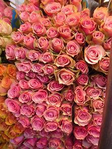 綺麗なお花②