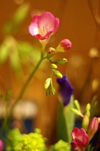 0221お花
