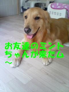 080611_1300~01