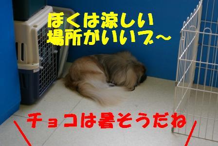 IMGP6304.jpg