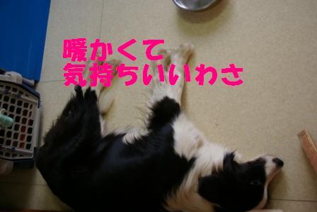 IMGP6320.jpg