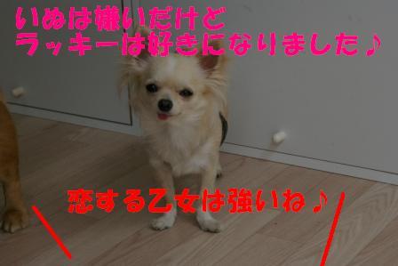 IMGP6348.jpg
