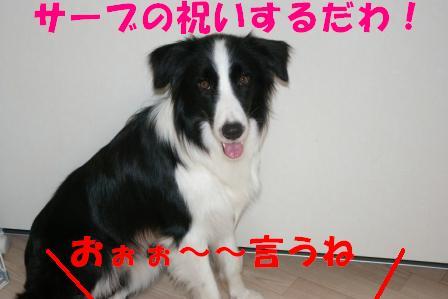 IMGP7316.jpg