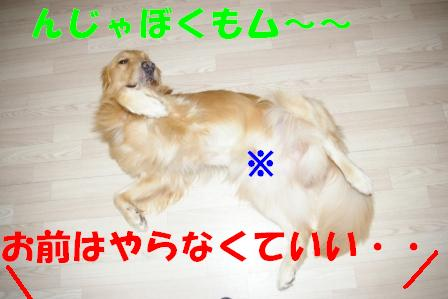 IMGP7321.jpg