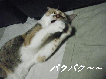 10_20080628154302.jpg