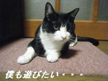 11_20080628154311.jpg