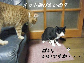 12_20080628154319.jpg