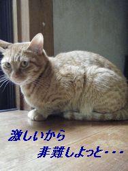 マロン(え)