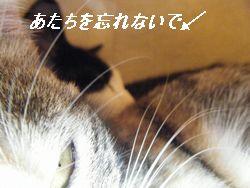 ココチップ2(く