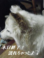 ちー(け)