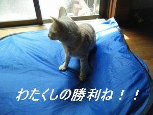テント2(い)