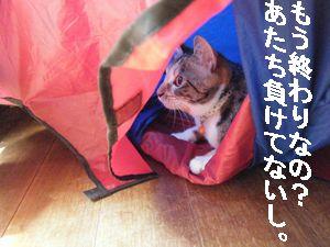 テント3(う)