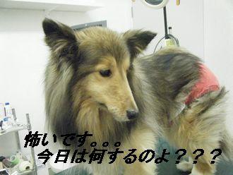 診察前(い)