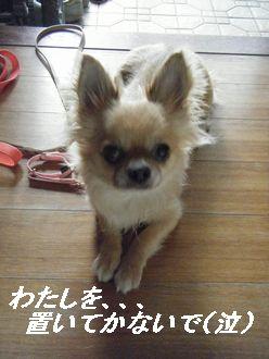 キャンおまけ(お)