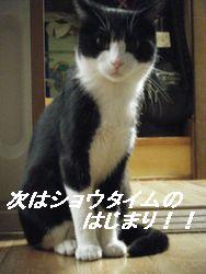 メット1(き)