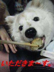 ちーちゃん(う)