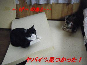 メットココ(お)