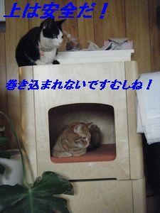 マロ・チ(え)