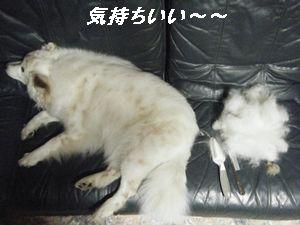 ちーブラシ(あ)