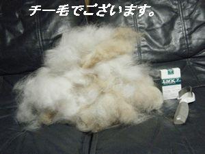 チー毛(い)