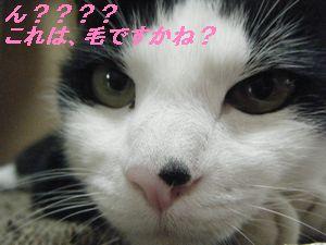 チップちゃん(か)