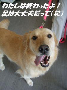 アン終(え)