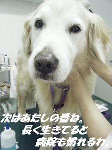 ポメ診察台(き)