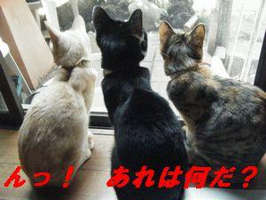 3匹2(い)