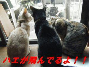 3匹3(う)