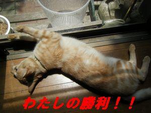 ナッツ寝(お)