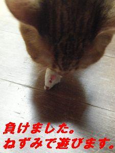 ねずみ1(か)