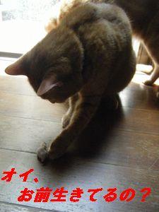 ねずみ2(き)