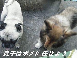 チャ・まめ(4)