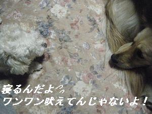 アン&コモ5
